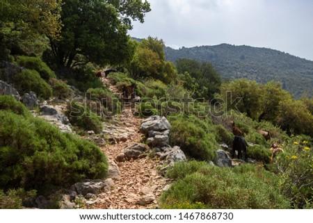 Walking in Lycian Way. Lycian Way trekking. Hiking trail in Lycian Way.