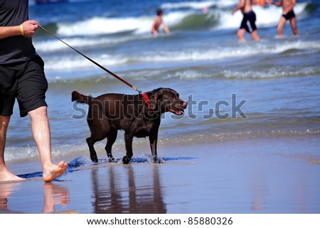 Walking on the beach, man an his pupil