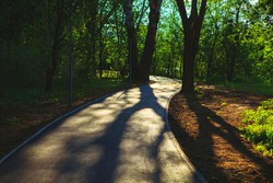 walking path and shadows of the trees