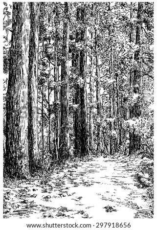 Walking path in the pine alley. Black and white dashed style sketch, line art, drawing with pen and ink. Trend of book illustration and comic art. Retro vintage picture / etching / engraving on paper.