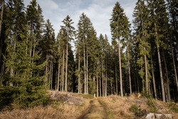 Walking path leading to the forest. Autumn days in National park Sumava, Czech republic.