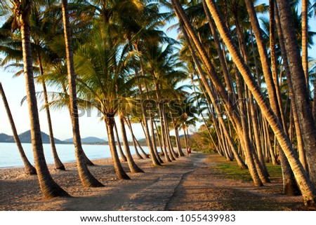 Walking track through a beautiful stand of coconut palms caught in the warmth of early morning at Palm Cove, Far North Queensland.