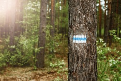 Walking trail background. Blue forest path. Brown tree trunk. Guide sign made with paint. Symbol points right way to go. Forest navigating map. Bieszczady National Park in Poland. Blue hiking trail.