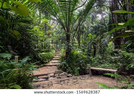 Walking trail in a Rain forest jungle with concrete bench and steps for recreational activities