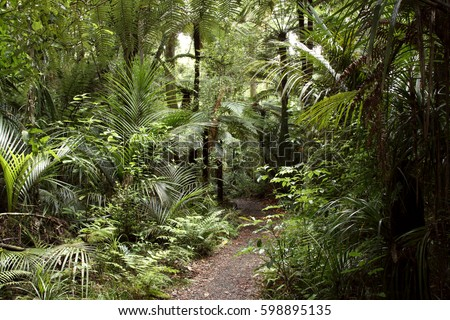 Walking trail in tropical forest #598895135