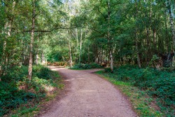 Walking trail through Epping Forest in Essex, England