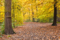 Walking trail with beautiful autumn scene in Highgate wood in North London