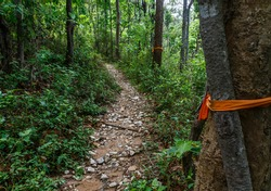 walking up the pathway of monks to doi suthep from the middle of the forest - chiang mai thailand