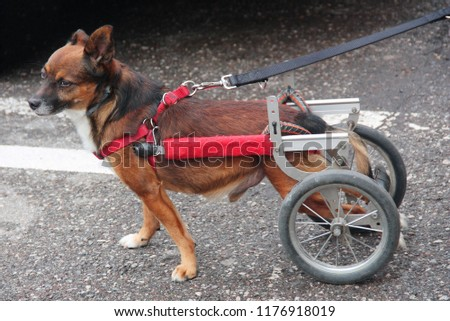 Walking wheels rear dog wheelchair  #1176918019