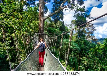 Walkway canopy tour, bridge in the rain forest, Kota Kinabalu, Borneo, Malaysia