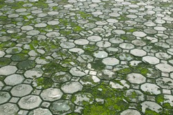 walkway cement floore tiles with moss and grass