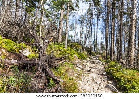Walkway in High Tatras mountains near Stary Smokovec town, Slovakia. Picturesque view in bright sunny day