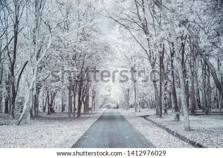 Walkway in historical area with high tree,infrared photo for background.