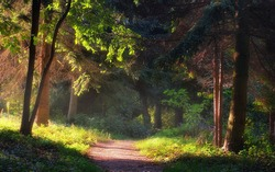Walkway in the garden with morning lights, Pannonhalma Arboretum, Hungary