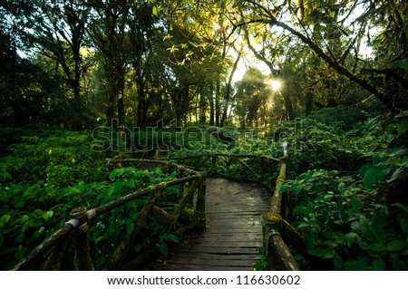 Walkway in the hill evergreen forest of Doi Inthanon, Chiang Mai, Thailand