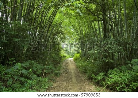 walkway in tropical forest - stock photo