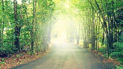 Walkway Lane Path With Green Trees in Forest, vintage effect