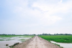 Walkway of rice paddies between rice paddies and paddy fields. The background mountain and bright blue sky with white clouds. country road in green rice field.