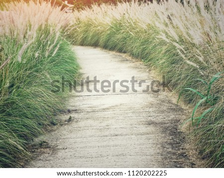 Walkway or concrete route with natural grass, direction concept, future, travel, route of life, lifetimes #1120202225