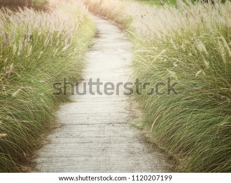 Walkway or route with natural grass, direction concept, future, step, route of life, lifetimes #1120207199