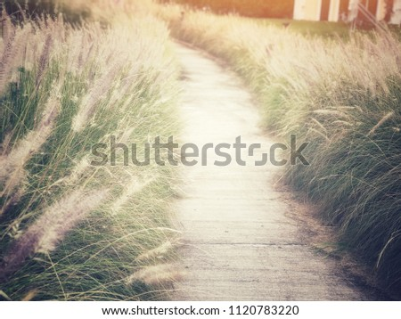 Walkway or route with natural grass, direction concept, future, step, route of life, lifetimes #1120783220