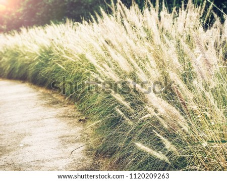 Walkway or route with natural grass, direction concept, future, travel, route of life, lifetimes #1120209263