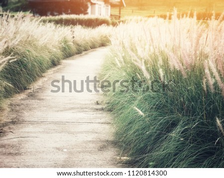 Walkway or route with natural grass, direction concept, future, travel, route of life, lifetimes #1120814300