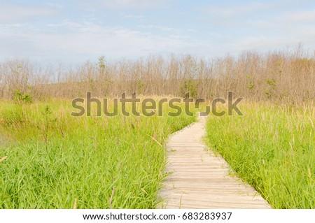 Walkway over swamp