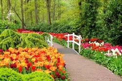 Walkway through spring flowers at Keukenhof Gardens, Netherlands