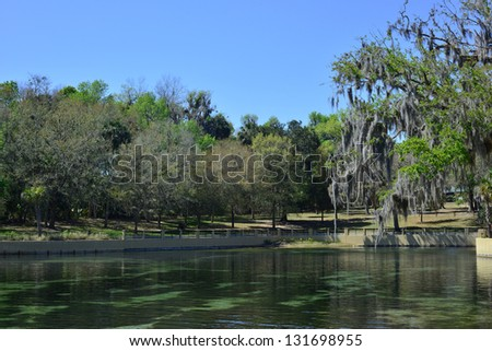 Walkway with Spanish moss at Salt Springs  in Ocala National Forest in Florida.