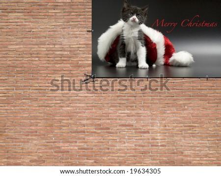 wall announce merry christmas