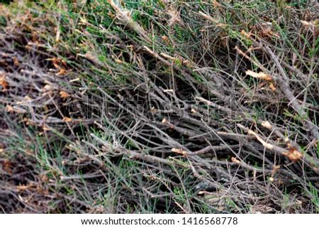 Wall bush after bush trimming. #1416568778