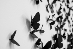 Wall full of black butterflies. An artistic take on those beautiful insect