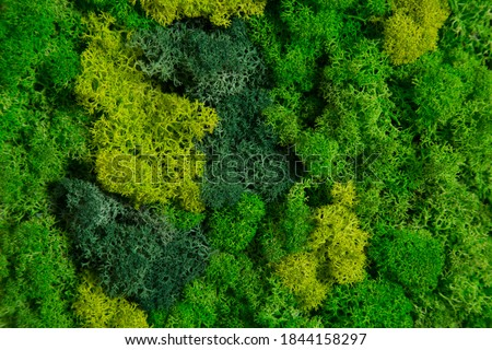 Wall in the room decorated with stabilized moss. Moss and lichens for decoration of the interior. Eco design concept.