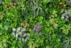 wall is full of Vegetation green color.