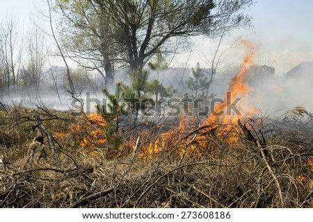 wall of fire and smoke in the forest fire
