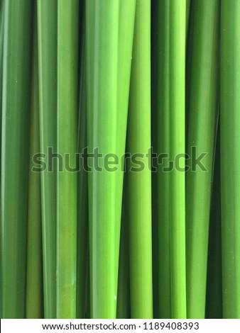 Wall of green plants stalk . #1189408393