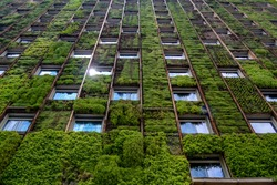 Wall of high-rise building covered with plants, reflection of sunlight in one of the windows
