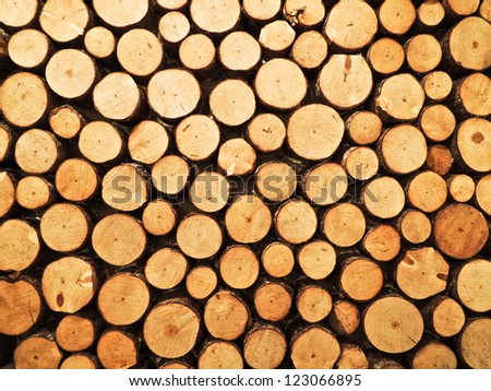 Wall of wood stump