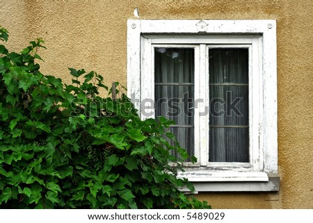 Wall, old window with rugged frame and grapevine.