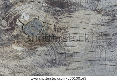 Wall tree texture grunge of tree background