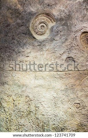 Wall with fossil at butterfly garden, Phuket, Thailand