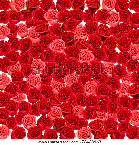 Wallpaper of red and pink roses