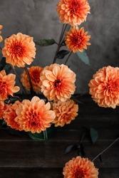 Wallpaper. Orange dahlia flowers background. Flower texture.