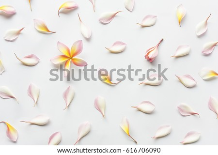 wallpaper pattern of plumeria flowers laying on white background. Concept of love and spring. Flat lay, top view. #616706090