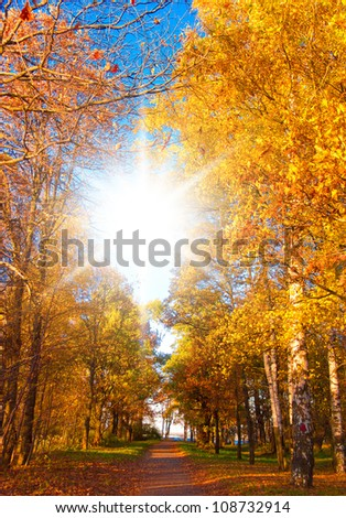 Wallpaper Sunshine Foliage Beams