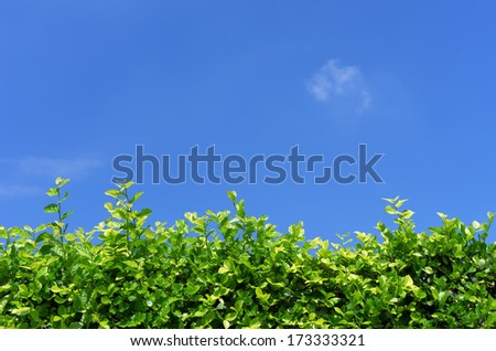 Walls, trees and blue sky in the daytime. Illustration for background