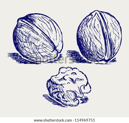 Walnut. Doodle style. Raster version