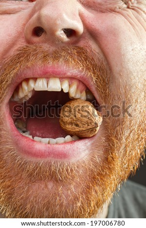 Walnut in teeth with red beard around the open lips closeup