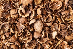 Walnut shells as a background. Texture of empty broken walnut shells. Biodegradable food waste and peelings. Nut crop concept. Full frame. Top view.